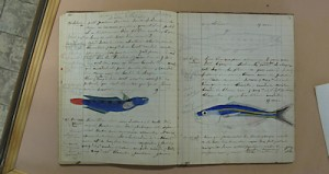 Photo of notebook with fish drawings