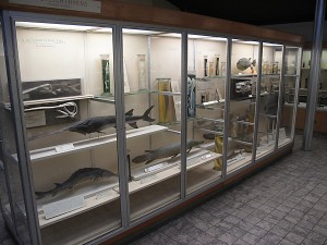 Fish exhibit of the zoological museum in Liège